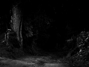 Winter 2009 A Dark Path by burzinski| CC BY 3.0