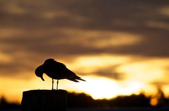 Morning Prayer at Tilghman Island Narrows by 57RRoberts   CC BY-SA 3.0